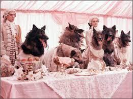 狼の血族.jpeg